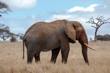 Elefantengruppe in der Savanne