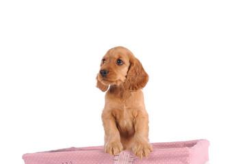 sad puppy dog