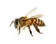 Obrazy na płótnie, fototapety, zdjęcia, fotoobrazy drukowane : bee