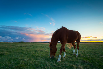 brown horse eats grass at field after sunset