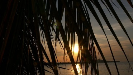 Golden Sunset through Palm Trees Silhouette. Slow Motion.