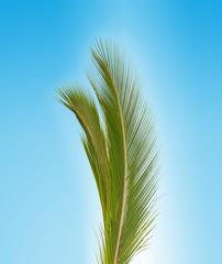 palme verte sur fond bleu