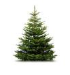 Leinwanddruck Bild - Tannenbaum