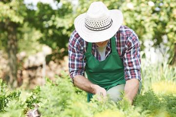 Hard work of man in garden