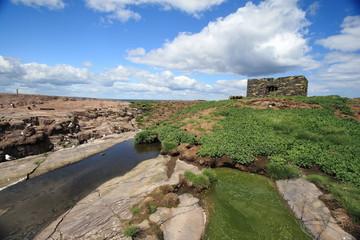 isole farne scozia paesaggio