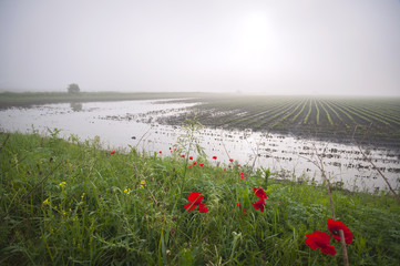 Flooded agricultural land
