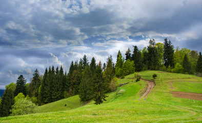 Coniferous forest on a mountain.