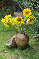Magnificent bouquet of vivid sunflowers in antique clay pot