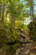Laverty Falls Trail Path