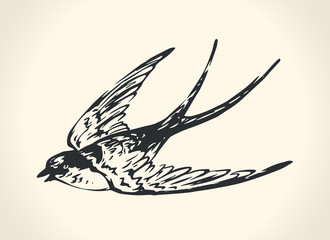 Vintage illustration of swallow