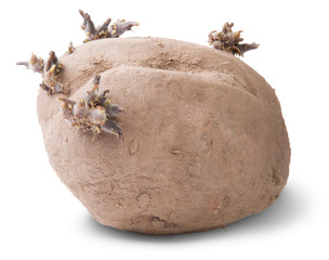 Dirty Sprouting Potatoes Rotated