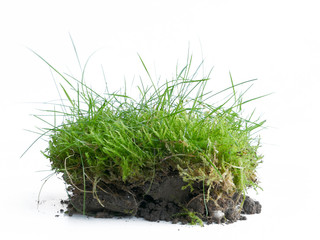 Rasenstück, Grassode isoliert vor weißem Hintergrund