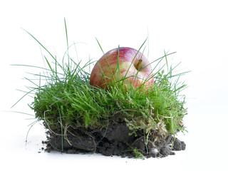 Apfel im Gras, ein Stück Natur für die Gesundheit, Freisteller