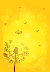 Silhouette dandelion with seeds on background of sunset. Vector