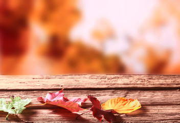 Three faded colorful Autumn or fall leaves