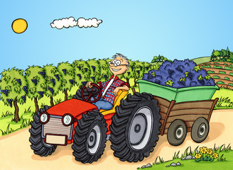 Mann transportiert Trauben während der Weinlese