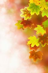 Herbst 44