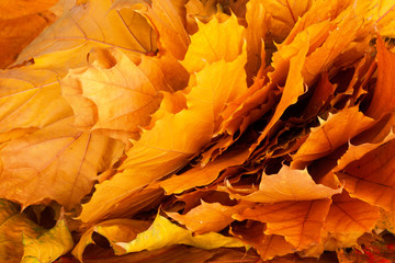 Bright and colorful background of fallen autumn leaves