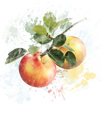Watercolor Image Of Apples