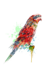 Watercolor Painting Of Colorful Parrot