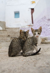 Cats living free on the streets of Tetouan, Morocco