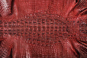 Crocodile leather
