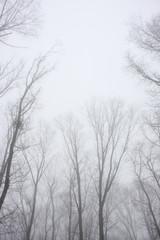 霧の森 軽井沢