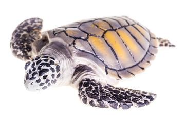 Isolated Sea turtle