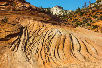 Sandstone patterns – Zion national Park.
