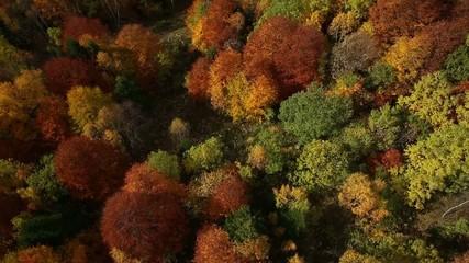 Лес с высоты птичьего полёта 006