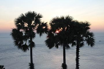 Coconut palm tree silhouette. Sunset