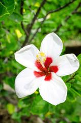 beautiful closeup spring blossoming tree