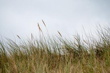 Nordsee Dünen Wangerooge