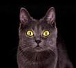 Katze mit leuchtenden Augen