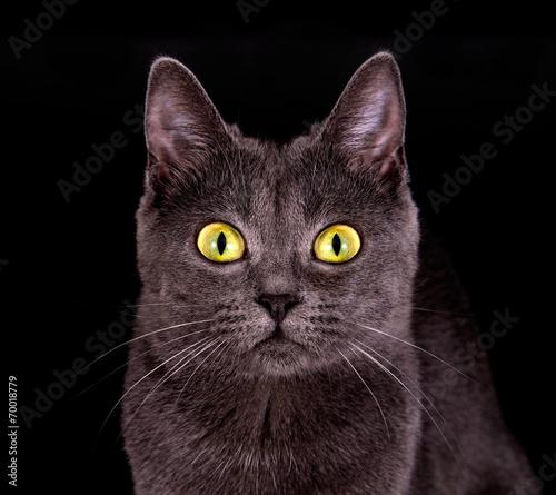 canvas print picture Katze mit leuchtenden Augen