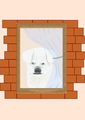 Il cane aspetta