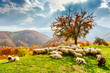 Autumn landscape in the Romanian Carpathians