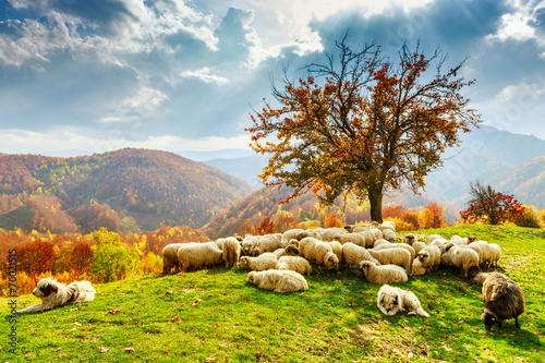 Fotobehang Heuvel Autumn landscape in the Romanian Carpathians