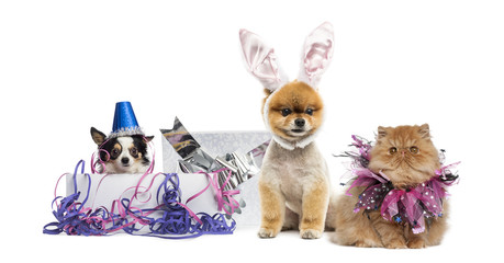 Dogs and cat partying