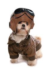 Shih tzu wearing a pilots costume