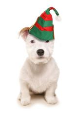 Cute dog wearing elf hat