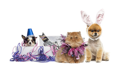 Dogs and a cat partying