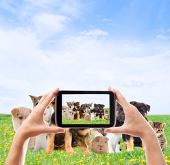 Photographing smartphone group pets