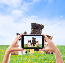 Photographing pets smartphone on the green lawn
