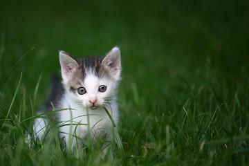 Mały kotek na tle trawy