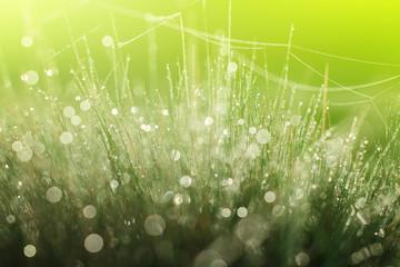 Magic cobweb in dewy grass