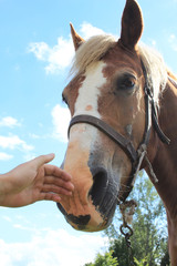 Hand caressing horses