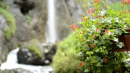 Waterfall and flowers, Sottoguda gorges - Dolomites