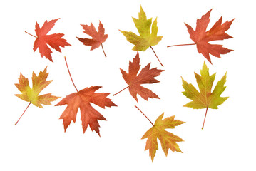 Scattered Autumn Leaves Background