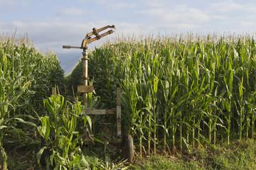 Sprinkler and corn